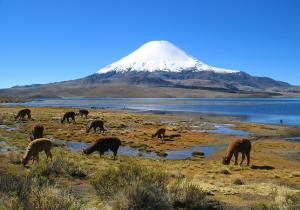 Volcán Parinacota, Chile