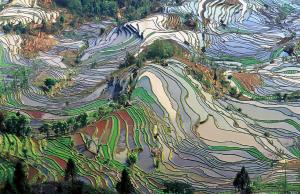 Terraced rice field, Yunnan, China